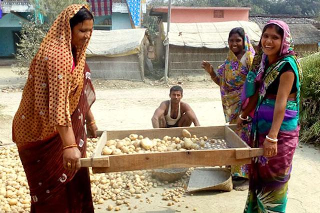 Potato farmers in Bihar