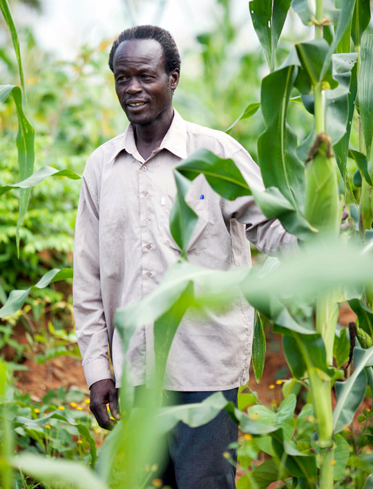 Francis Obwona with corn crop on farm in Uganda