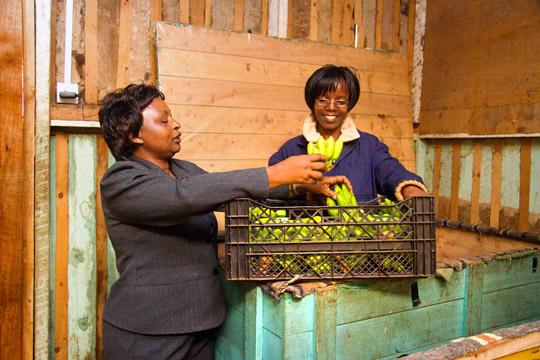Entrepreneur sorting through bananas in a community in Kenya