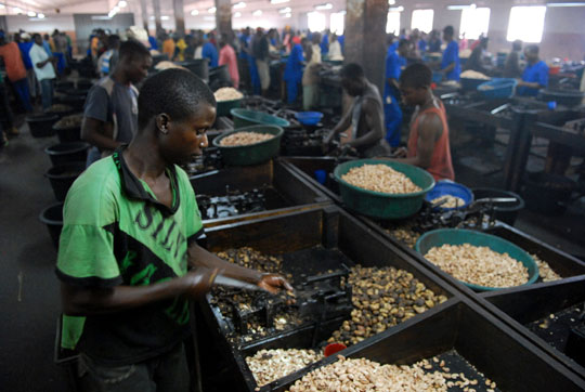 Young entrepreneur shelling cashews in Mozambique