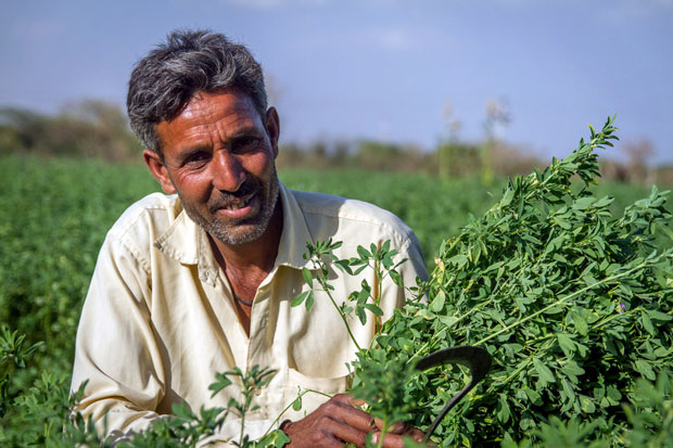 Working family man farming soybeans in India