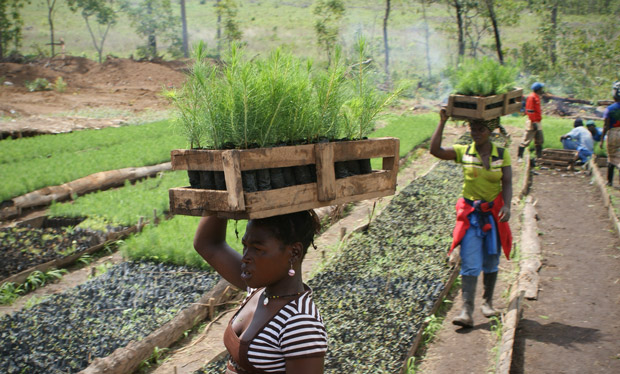 Workers at a tree nursery in Mozambique