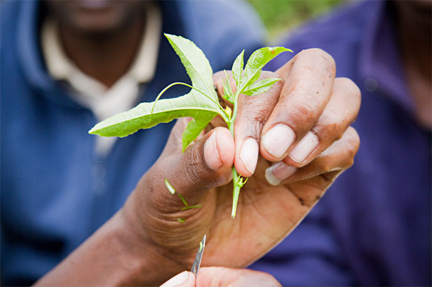 TechnoServe business advisor holding a passion fruit seedling in Kenya