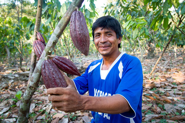 Farmer showcasing cocoa pods in Peru