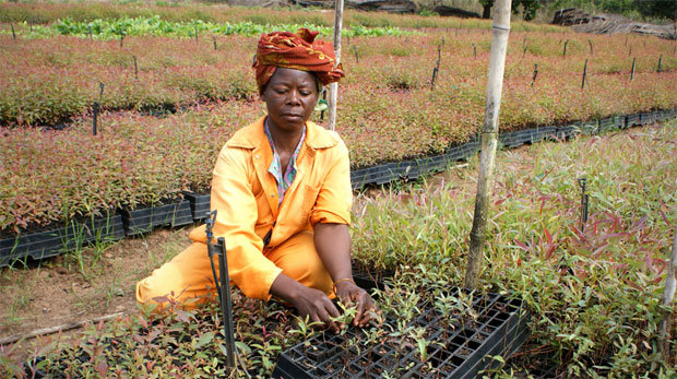 Women transplanting seedlings in Mozambique