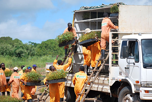 Employees loading seedlings for a shipment in Mozambique