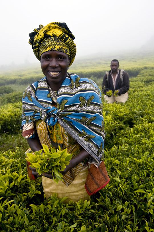 Tea pickers in Tanzania