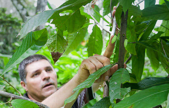 Entrepreneur cocoa plant and tree carer from Nicaragua